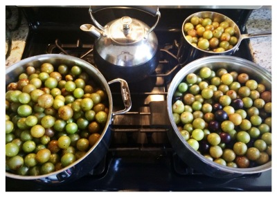 muscadines-cooking
