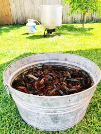 Bring on the Mud Bugs!!!